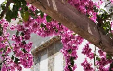 El Machistre Floral